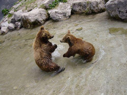 rudos meškos,turėti,gyvūnas,zoologijos sodas,gyvūnų pasaulis,snukis,laukinis gyvūnas,gamtos apsauga,jaunas gyvūnas,neša