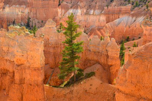 Bryce Kanjonas, Hoodoos, Usa, Medis, Nacionalinis Parkas, Amerikietis, Pietvakarius, Utah, Raudona, Oranžinė, Turizmas, Kraštovaizdis, Gamta, Pietvakarių Usa