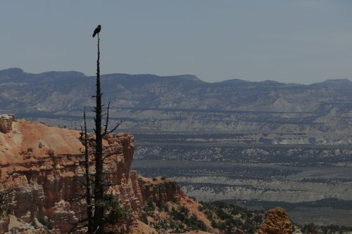 Bryce kanjonas,paukštis,laukinė gamta,nacionalinis,parkas,dykuma,Bryce,kanjonas,Utah,amerikietis,gamta,vaizdas,kraštovaizdis,orientyras,pietvakarius,lauke,usa,vaizdingas