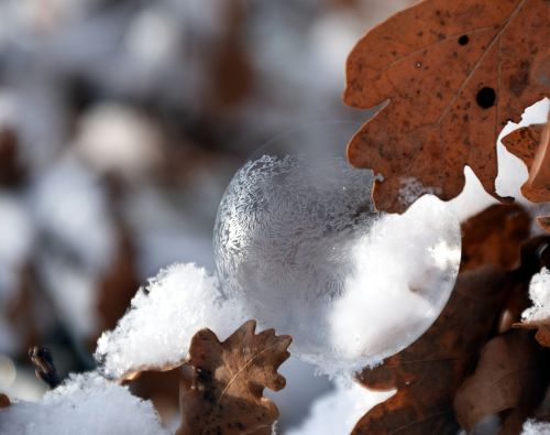burbulas,muilo burbulas,vaivorykštinis,žiema,sniegas,eiskristalio,ledas,sušaldyta,šaltas,matinis muilo burbulas,šaltis,rutulys,užšalęs burbulas,lengvumas,ąžuolo lapai