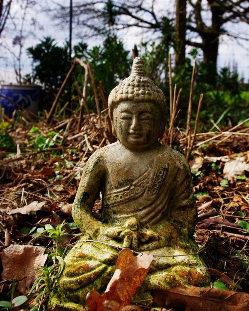 buda, meditacija, gamta, lauke, lapai, zen, budimas medituojantis
