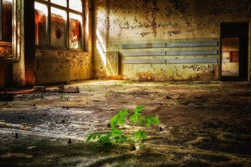 pastatas,kambarys,prarastos vietos,skilimas,išsiskirti,praeitis,pforphoto,purvinas,sunaikintas,purvas,apleistas,nuleisti,tuščia,niūrus,nuotaika,erdvė,palikti,nusidėvėjęs,tamsi,augalas,žalias,gyventi,gamta,apleistos vietos