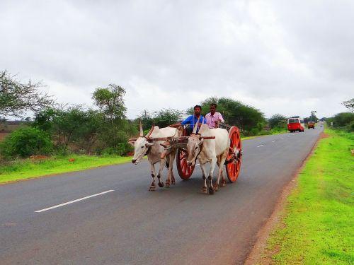 bulių vežimėlis,Karnataka,Indija,gadag,Hubli,greitkelis,kaimas,Šalis,kelias,kaimas