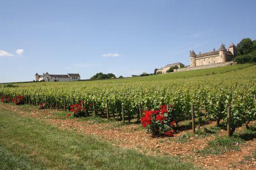 Burgundija,vynuogynas,pilis