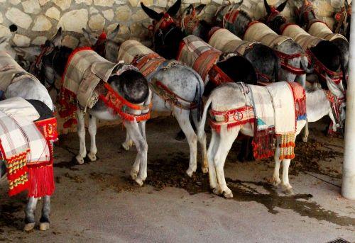 burros,asilas,žvėriška našta,Ispanija,Andalūzija,Mijas Ispanija,balti kaimai,išsaugojimas,tradicija,turizmas,vidaus vandenyse,saulėtas,kalnas