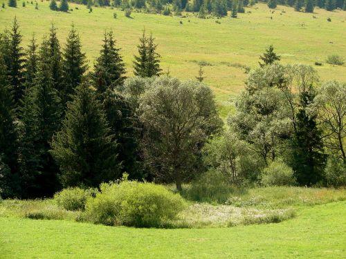 krūmas,miškas,pieva,žalias,gamta,kalnas,kraštovaizdis,laukas,medžiai,krūmai,vasara,šviesiai žalia,tamsiai žalia,kalvotas,spalva