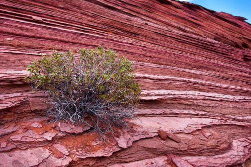 Arizona, krūmas, lustai, dykuma, dribsniai, augimas, sluoksniai, Rokas, smiltainis, pietvakarius, akmuo, sluoksniai, Utah, krūmų ir uolų sluoksniai