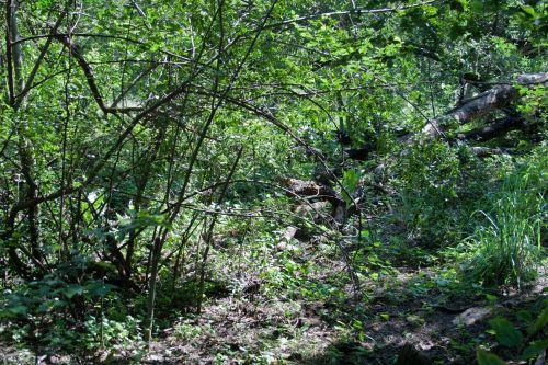 gamta, takas, medžiai, krūmai, žalias, krūmai ir bobutė