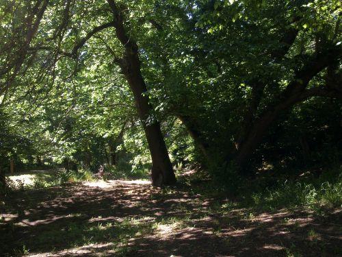 medžiai, krūmas, giraitė, žemė, kelias, peizažas, bushland