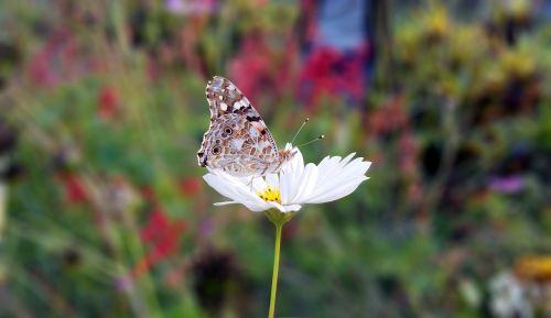 drugelis,kiliminė danga,makro,makrofotografija,fotografija,vabzdžiai,musia,Bangladešas,žalias,gamta,kelionė