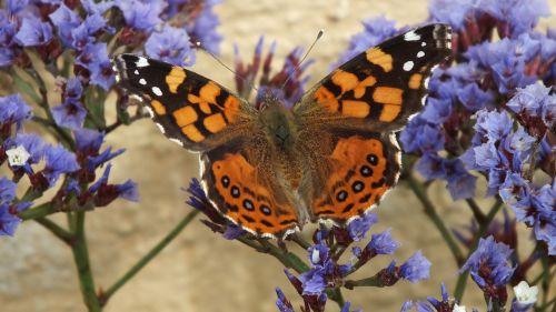 drugelis,gamta,sparnai,oranžinė,drugelis ant gėlių,gėlės,makro