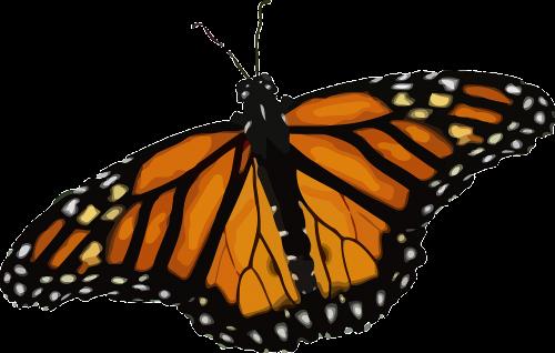 drugelis,monarcho drugelis,danaus plexippus,pieno vaisių drugelis,podsama danainae,nymphalidae,gyvūnas,vabzdys,gamta,nemokama vektorinė grafika