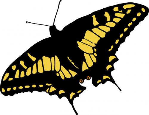 drugelis,gamta,papilio machaon,vabzdys,gyvūnas,nemokama vektorinė grafika