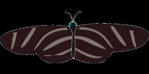 drugelis,vabzdys,gyvūnas,juoda,balta,zebra longwing,zebras heliconian,heliconius charitonija,nemokama vektorinė grafika