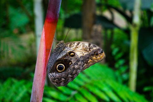 drugelis,gamta,spalvos,sparnai,drugelis ant gėlių,gėlė,laisvė,vabzdys,drugelis sodas,benalmádena,fauna,metodas,sodas,makro
