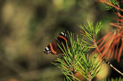 drugelis,laukas,vabzdys,drugelio sparnai,kraštovaizdis,gamta,sparnai,gyvenimas