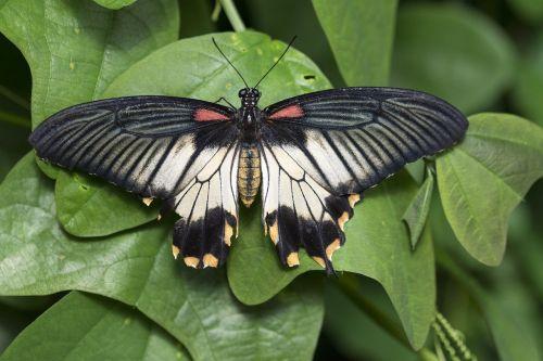 drugelis,drugelis sodas,sparnai,drugelis parkas,žalias,natiurmortas,vabzdžiai,klaida,Papiljonas,gamta,fauna
