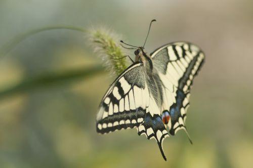 drugelis,gamta,vabzdys,gyvūnai,žemė,Uždaryti,gėlė,žiedas,žydėti