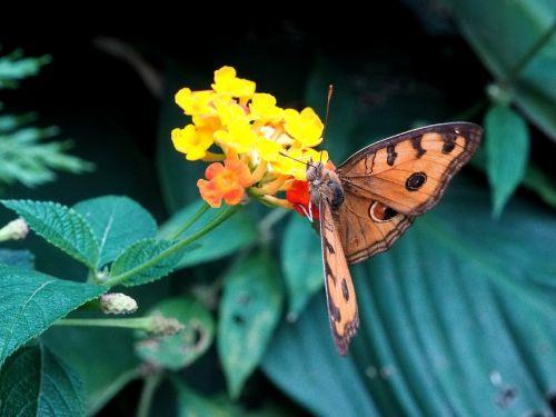 drugelis,vabzdys,gėlė,pavasaris,spalvinga,klaida,sodas