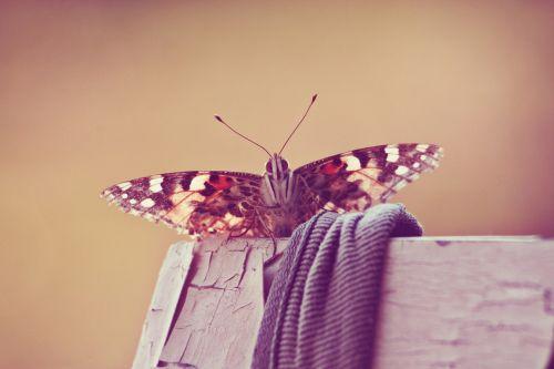drugelis,vabzdys,gamta,vasara,nariuotakojų,fauna,gyvūnas