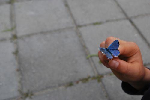 drugelis,ranka,pirštas,mėlynas,fonas,gražus,gamta