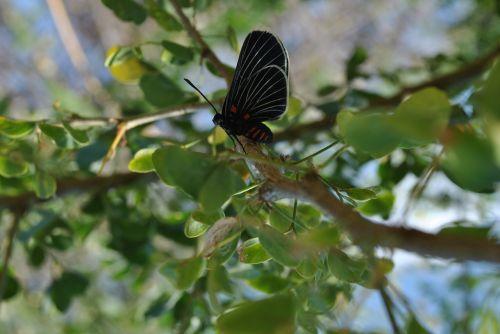 Drugelis, Fauna, Gamta
