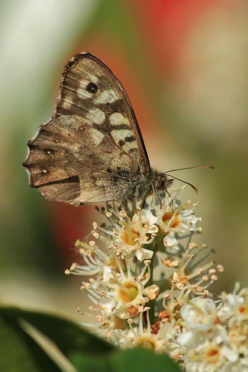 drugelis,drugeliai,vabzdys,gyvūnai,gyvūnas,vabzdžių makro,drugelio makro,Uždaryti,makro,flora,fauna,gamta,žiedas,žydėti,gėlės,lapai,spalva,farbenspiel,spalvinga,sparnas,zondas,skrydžio vabzdys,pleistras drugelis,filigranas,makro nuotrauka