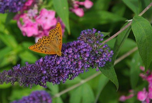 drugelis, žiedas, žydi, pobūdį, Gyvūnijos pasaulyje, gėlė