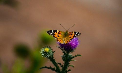 drugelis, pobūdį, laukinių, vasara, žalias, neryškus, oranžinis