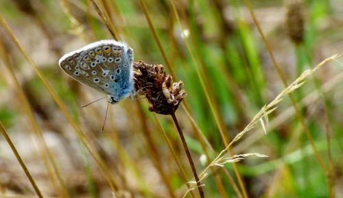 drugelis,drugeliai,klaida,mėlynas,atmosfera,sodas,gamta