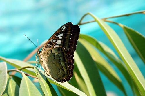 drugelis, gamta, vabzdys, Iš arti, atogrąžų vabzdžių
