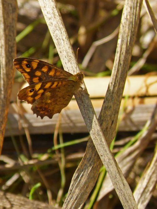 drugelis,monarchas,išsamiai,sparnai,ruduo,drugelio sparnai,oranžinė