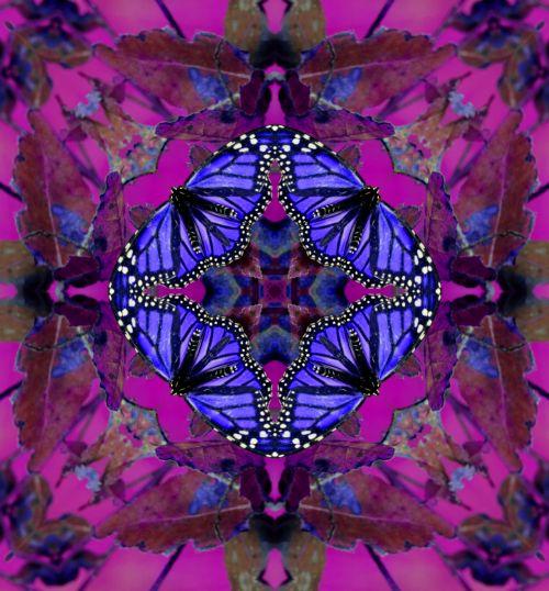 fonas, tapetai, Kaleidoskopas, drugelis, drugeliai, monarchas & nbsp, drugelis, monarchas, violetinė, rožinis, gamta, kvadratas, aikštės, dizainas, modelis, simetrija, klaidas, vabzdžiai, pavasaris, drugelis fone