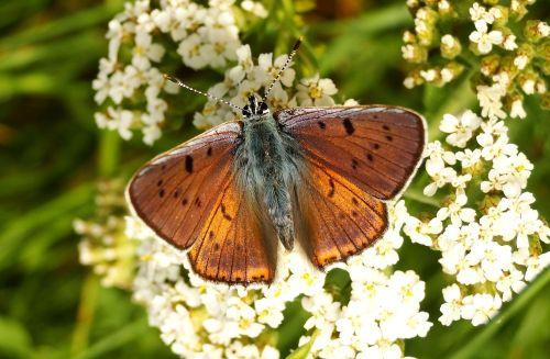 drugelio diena,vabzdys,gamta,gėlė,sodas,gyvūnai,drugeliai,hey migla,antenos,spalva,gėlių,gražus,augalas,teismo posėdyje,vasara