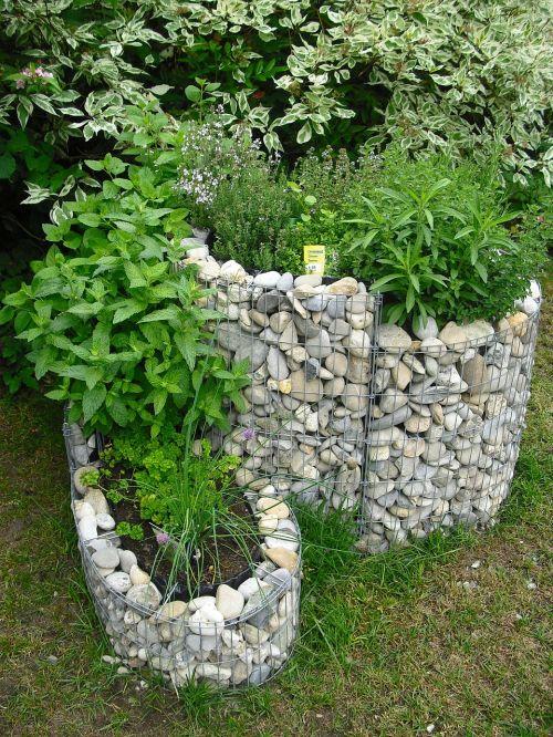 kopūstų širdys,žolelės,sodas,aromatinės žolelės,vasara,gamta,Žirniai,augalas