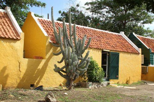 kaktusas,Kurasao,pastatas,geltona,architektūra,namo fasadas,namai