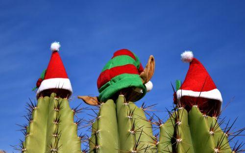 kaktusas,Kalėdos,šventė,šventė,šventinis,papuoštas,šventė,linksmų švenčių,spalvinga,xmas,sezoninis,apdaila,švesti,dekoruoti