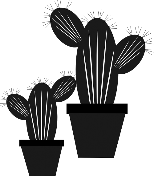 kaktusas,gėlė,gamta,žalias,gėlių sodas,kaktusas dahlia,kompozitai,dekoratyvinis augalas,dekoratyvinė gėlė,nemokama vektorinė grafika