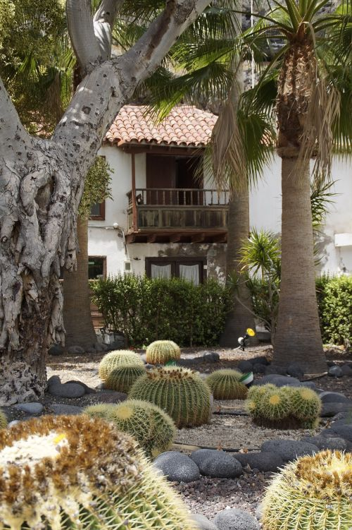 kaktusas,kaktusas sodas,namelis,sodas,atogrąžų,Tenerifė,egzotiškas,dygliuotas,gamta,flora,Ispanija,globojamos,rutulinis kaktusas
