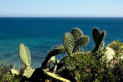 kaktusas,gamta,vasara,costa,jūra,Ispanija,kraštovaizdis
