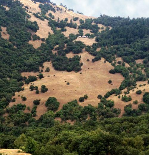 Kalifornija,kalnai,medžiai,vaizdingas,Šiaurės Kalifornija,gamta