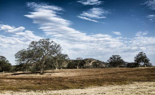 Kalifornija, medis, mediena, žolė, sausas, kažkur, gražus, romantiškas, karštas & nbsp, oras, saulėtas, Kalifornija 3