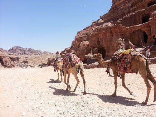 kupranugaris,dykuma,arabų,kelionė,važiuoti,saulėtas,gamta,safari,transportas,turizmas,kelionė,kelionė,vasara,šiluma