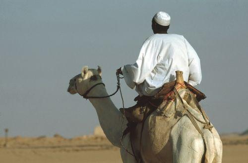 kupranugaris,kupranugaris,važiuoti,dromedary,Egiptas,dykuma