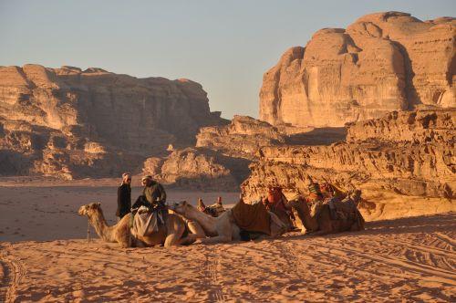 Kupranugariai, Beduinai, Wadi Rum, Jordan