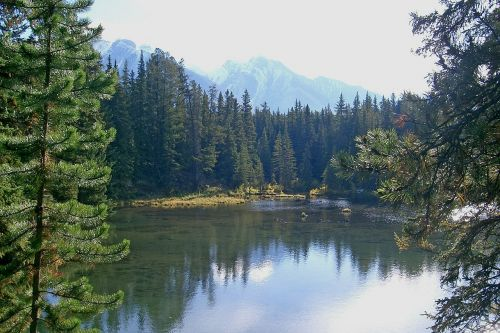 Kanada,Banfo nacionalinis parkas,Nacionalinis parkas,banff,gamta,Alberta,ežeras,miškai,atspindys,eglė,tylus,kalnai,gražus