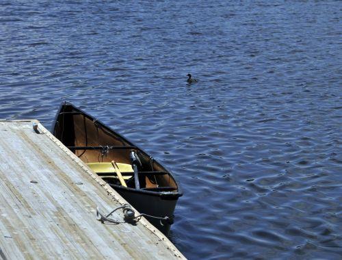 kanoją, valtis, antis, ežeras, vanduo, sportas, plaukiojimas, paukštis, paukščiai, gamta, lauke, buriuotojas, baidarė ir antis