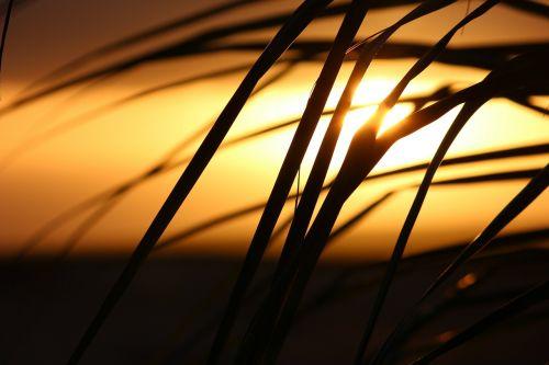 cape verde,saulėlydis,palmė
