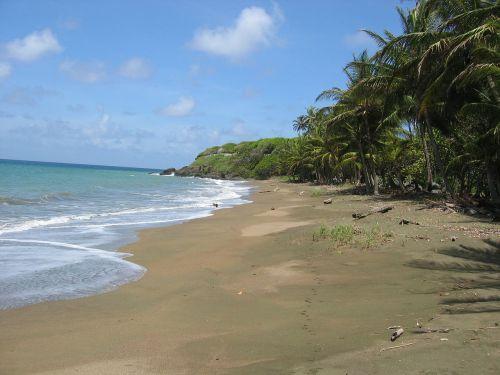 karibai,papludimys,palmės,smėlis,smėlio paplūdimys vienišas,jūra,kranto