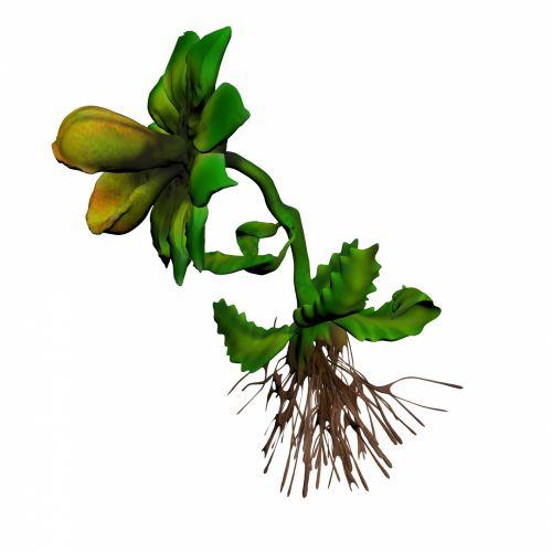 mėsėdis & nbsp, augalas, 3d, piešimas, mėsėdis, žalias, augalas, piktograma, pritraukti, snap, užfiksuoti, virškinti, mažas, vabzdžiai, gyvūnai, mėsėdis augalas